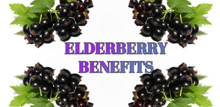 The Benefits of Elderberry | El Paso Texas Chiropractor