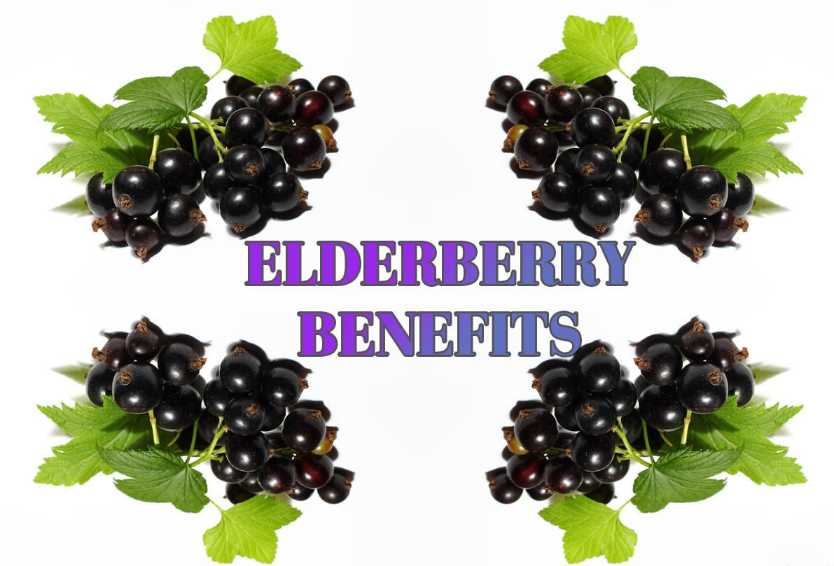 The Benefits of Elderberry | El Paso Texas Chiropractor