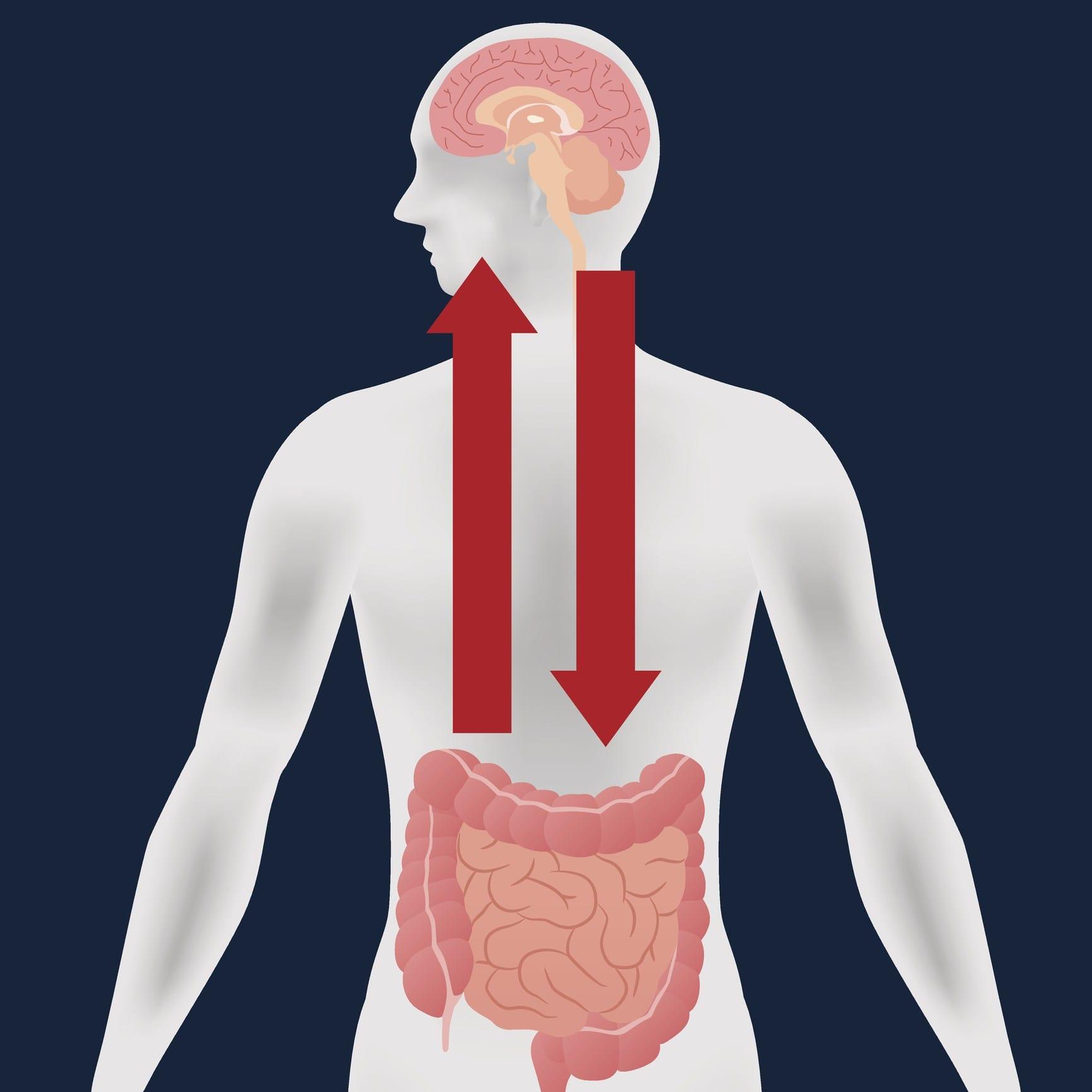 Gut Brain Axis | El Paso Texas Chiropractor