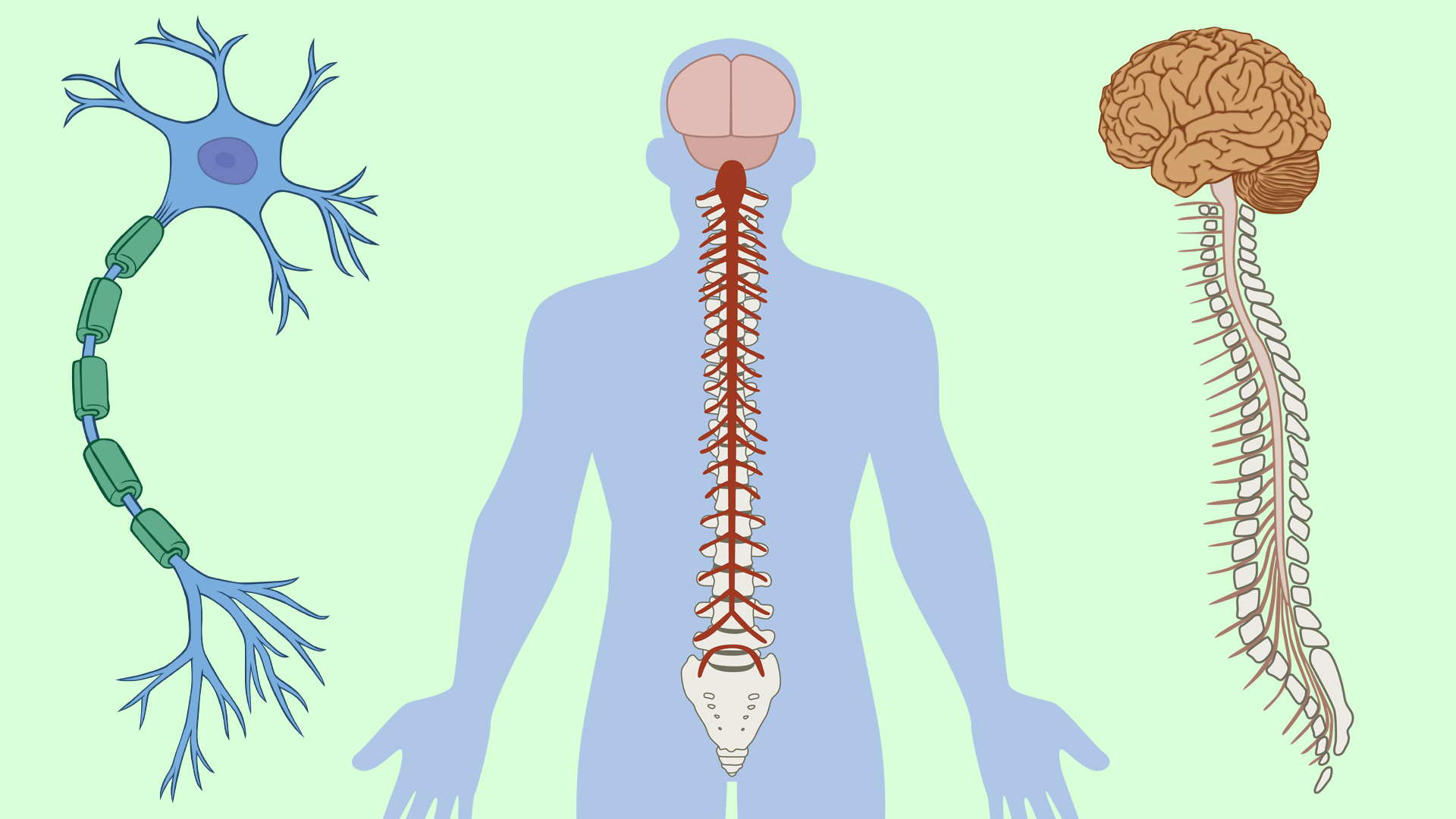 Functional Neurology: Inflammation, The Nervous System, and Oxidative Stress   El Paso Chiropractor Health Coach