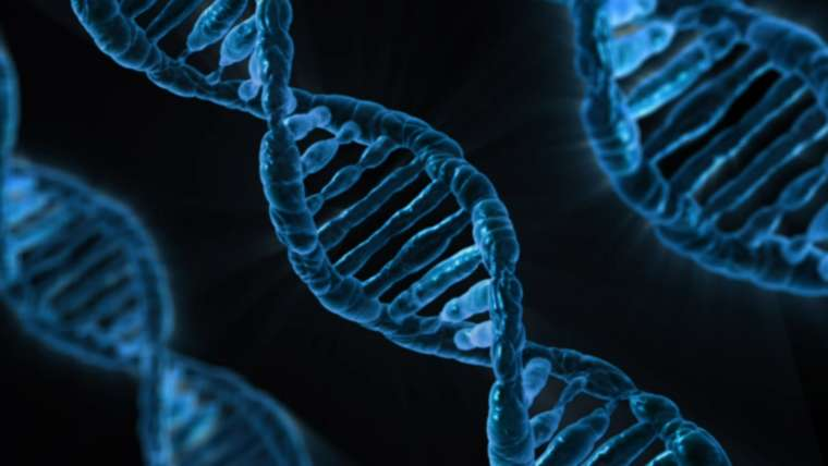 Genes: What Are They? Health Coach El Paso