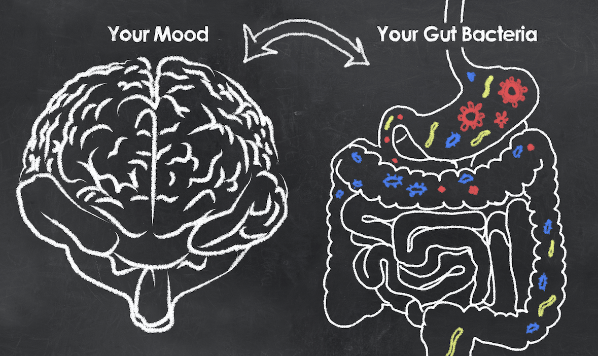 The Guts Relation to Optimal Brian Health  El paso Texas Chiropractor
