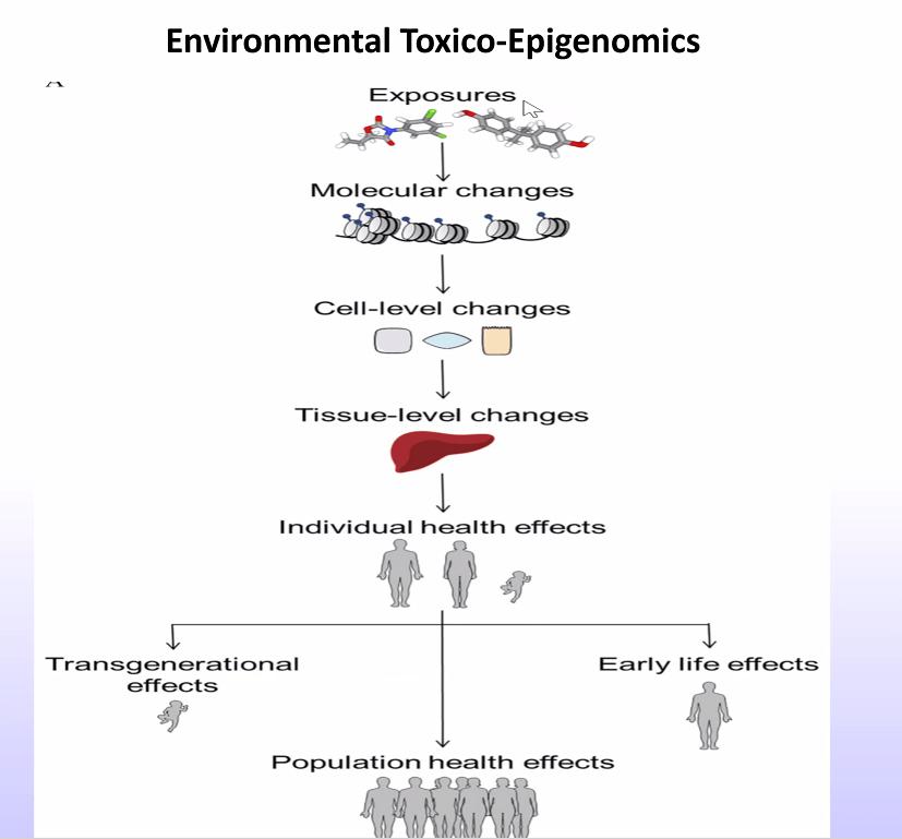 Environmental Toxico-Epigenomics