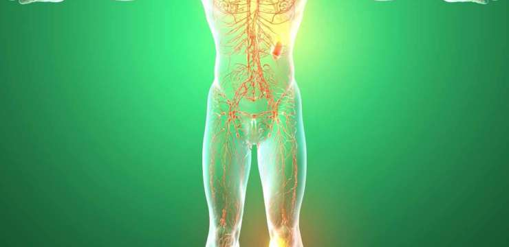 Tissues of the body | El Paso TX