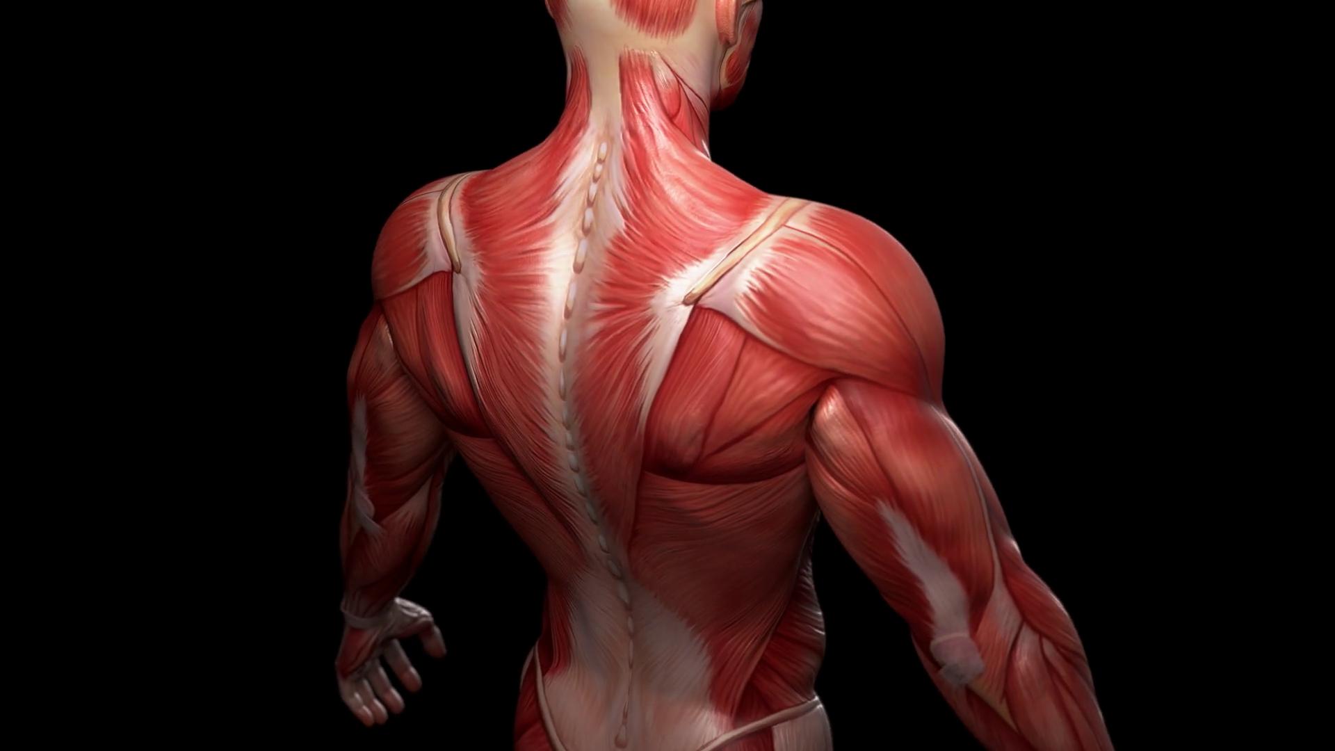 Musculoskeletal and Gut Health | El Paso TX