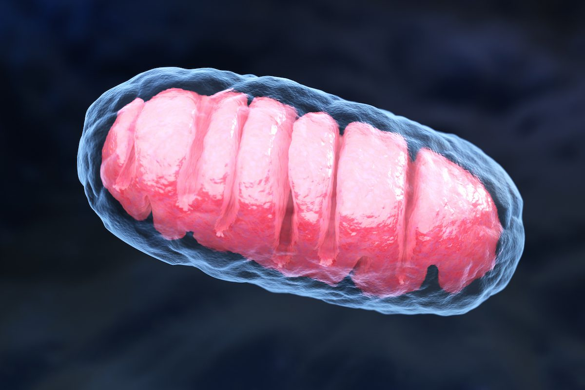 mitochondrial aging